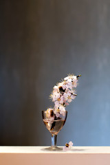 Blossoming tree branch in a wineglass on a dark background