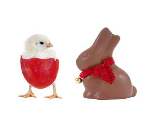 Küken und Schokoladenhase