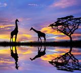 Fototapety animales en el lago