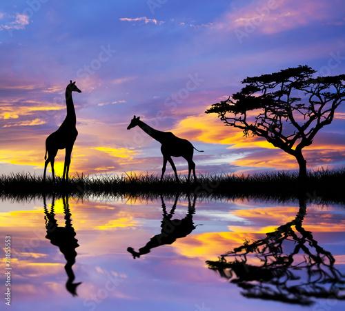 Fotobehang Olifant animales en el lago