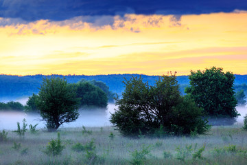 Ealry morning scene in steppe