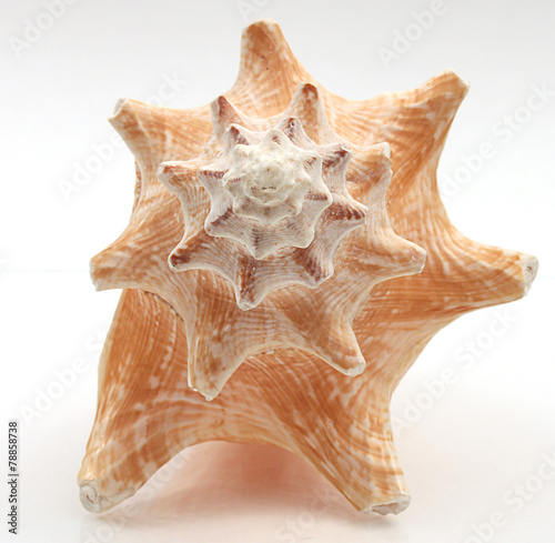 Seashell - 78858738