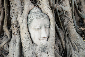 Head of Buddha statue in the tree roots at Wat Mahathat temple,