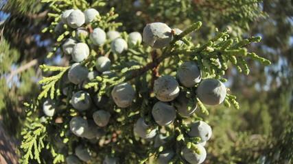 Blueberries - Take 2