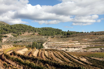 vineyards and wineries, Montsant mountains, Tarragona, Catalonia