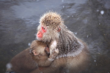 Monkey mother and baby in hot spring