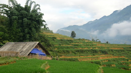 Farm House Surrounded by Rice Terraces in Valley -  Sapa Vietnam