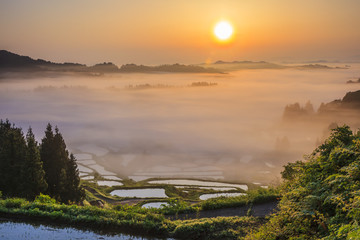 Sea of clouds and rice terraces, Hoshitouge, Niigata