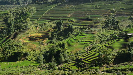 Time Lapse Pan - Rice Terraces in Green Valley Mountains of Sapa Vietnam