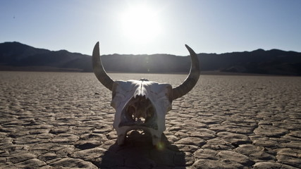 Pan of Skull on the Desert Floor - Death Valley