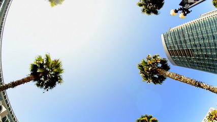 California Tropical Palm Trees Driving