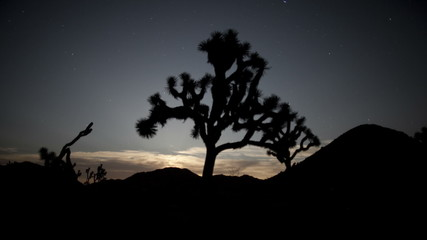 Pan of Joshua Tree at Night
