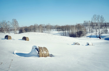 Beautiful winter landscape with rolls of hay on the white snow