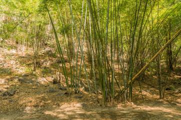 夕暮れの竹林