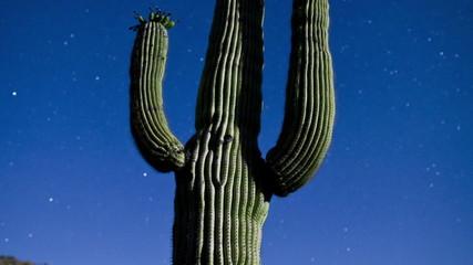 Night Desert Cactus with Star Lapse