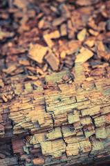 Totholz im Wald, Forstwirtschaft, Biotop