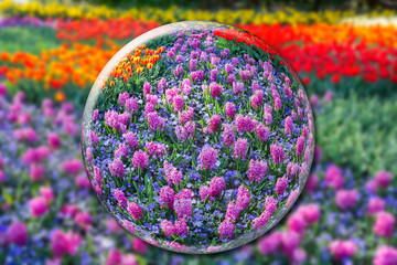 Crystall ball with pink hyacinths and flowers field