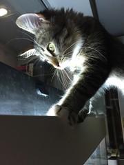 кошка смотрит в аквариум