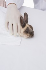 Veterinarian petting a cute rabbit