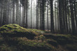 Leinwanddruck Bild - wilderness landscape forest with pine trees and moss on rocks