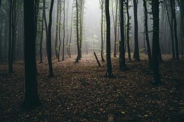light beam in misty forest