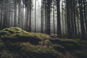 bezdroża krajobraz las sosny i mech na skałach