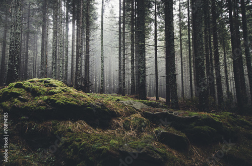 Aluminium Betoverde Bos wilderness landscape forest with pine trees and moss on rocks