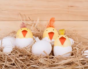 Hatching Easter Egg Chicks