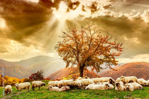 Leinwandbild Motiv Sheep under the tree and dramatic sky