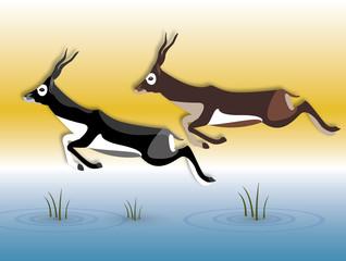 blackbuck antelope jumping over water illustration