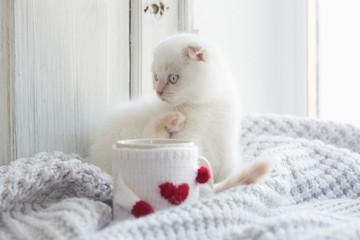 Valentine theme white kitten