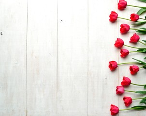 Red tulips on white wooden background
