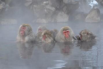 温泉に入る野生の猿