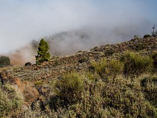 Northern slope of volcano Teide. Tenerife
