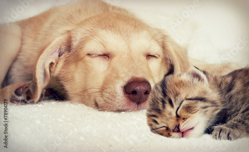puppy and kitten - 78904178