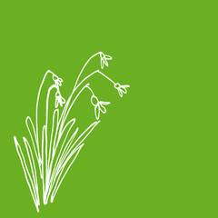 Hintergrund grün mit Schneeglöckchen