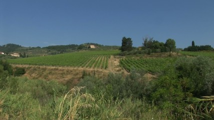 Tuscan countryside with vineyard
