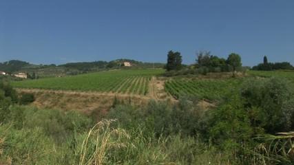 Tuscan countryside with vineyard