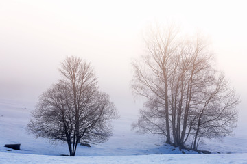 Tree Silhouette on the snow and fog