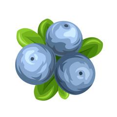 Blueberries isolated on white. Vector illustration.
