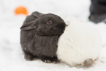 Adorable two bunnies black and white colours