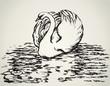 Swan. Vector sketch