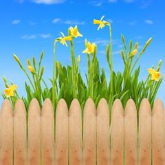 garden fence wooden spring blooming flowers sky