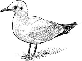 seabird on a shore