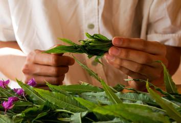 Production Koporsky tea. Men's hands. willow-herb