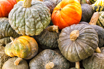 Pumpkins, gourds and squashes in a colorful assortment. Top view