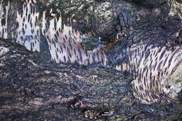 Grungy bark natural texture