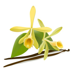 Vanilla flowers and beans