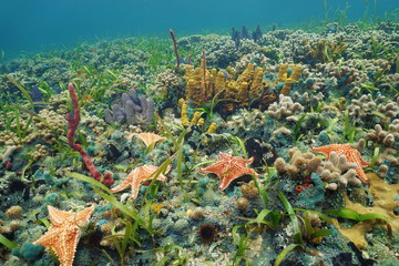 Colorful ocean floor with starfish on coral reef