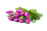 Strauß lila Tulpen
